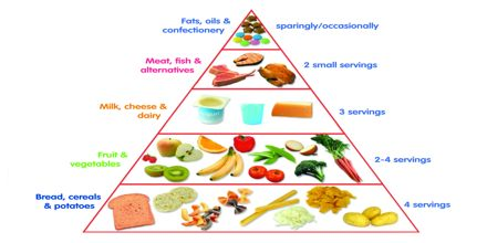 Food Pyramid Assignment Point