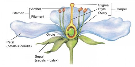 Biology Term Paper | YourTermPapers.com