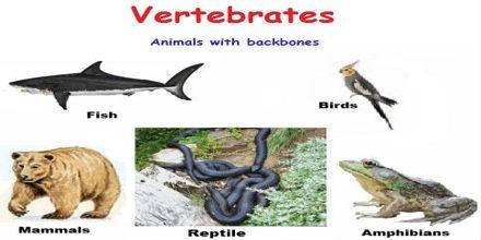Lecture on Vertebrates