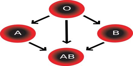 Lecture on Blood Type