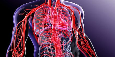 What are Blood Vessels?