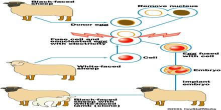 Cloning in Biology
