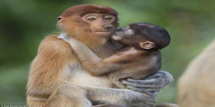 Emotion in Animals