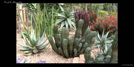 Lecture on Xerophytes
