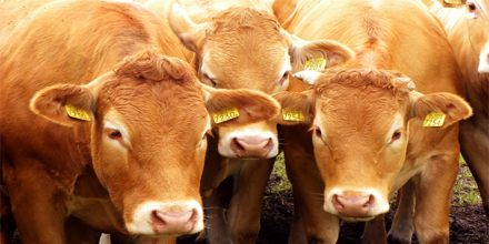 Plesentation on Animal Uses for Food