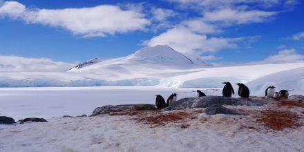 World's Last Great Wilderness: Antarctica