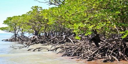 Coastal Ecosystems: Mangroves