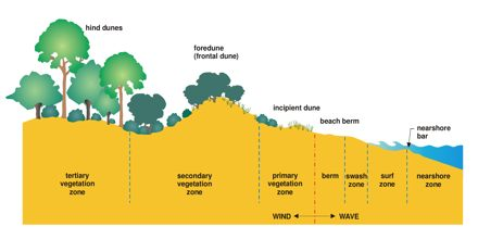 Coastal Environments: Sand Dune Systems