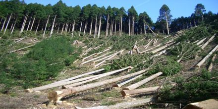 Lecture on Deforestation