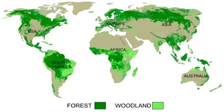 Presentation on Global Distribution of Forest