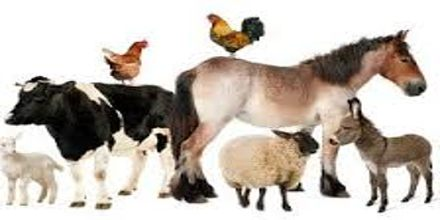 Lecture on Livestock Animals