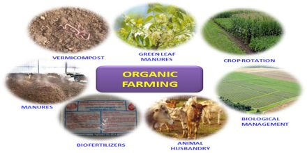 research papers on organic farming The scientific literature for research on organic farming in the united states and  canada since the year 2000 research papers published in.