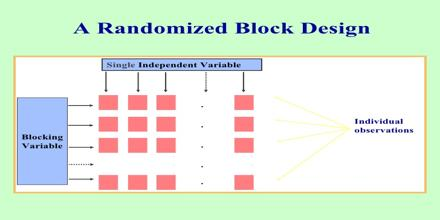 Randomized Block Design Assignment Point