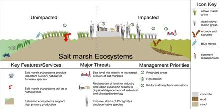 Coastal Ecosystems: Salt Marshes
