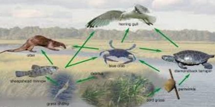 Importance of Salt Marshes