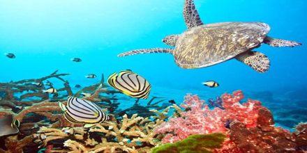 Beauty of Reefs