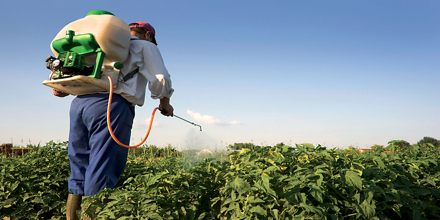 Presentation on Pesticides