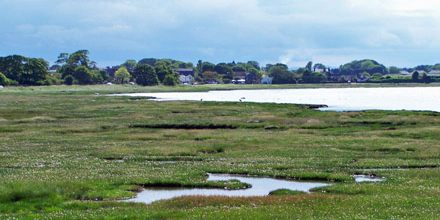 Lecture on Salt Marshes