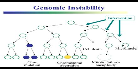 Genome Instability