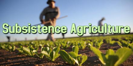 agribusiness or subsistence farming essay