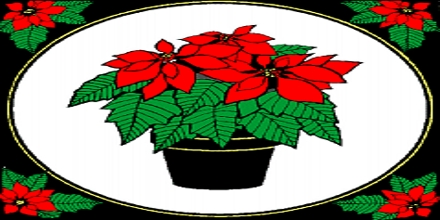 Poinsettias: Symbols of Xmas