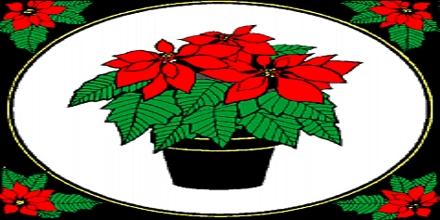 Poinsettias: Symbols of Xmas