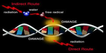 Effects of Radiation on Living Things