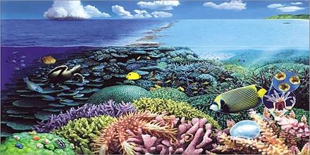 Coral Ecosystems