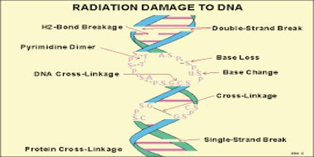 Cellular Effects of Ionizing Radiation