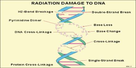 Cellular Effects of Ionizing Radiation