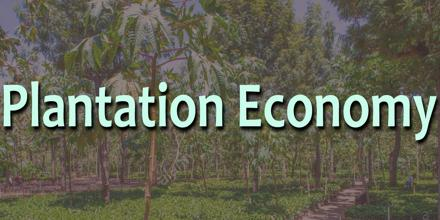 Plantation Economy