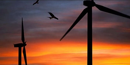 Wind Farms and Red Kites