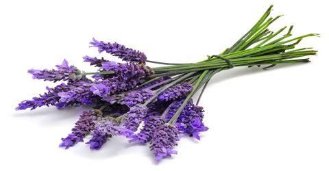 Health Potential of Lavender