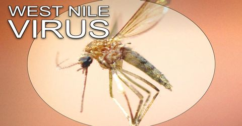 Aymptoms and Treatments of West Nile Virus
