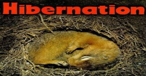 Animals Hibernate
