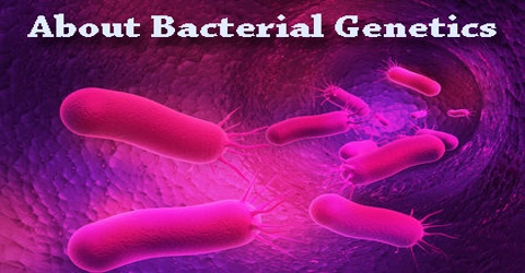 About Bacterial Genetics