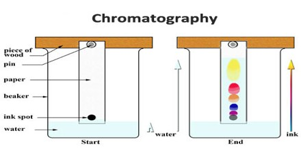 research papers on chromatography techniques Welcome to our second guide where you are provided with 20 chemistry research topics for a ccot essay to help you write effortlessly, without muddying up your mind or spending hours researching worthwhile topics for your the subject matter.