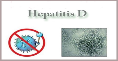 Describe about Hepatitis D