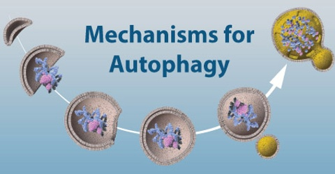 Mechanisms for Autophagy