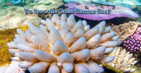 To Save the Great Barrier Reef