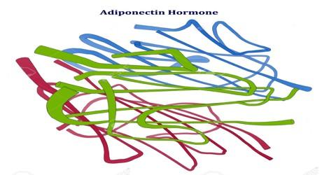 Adiponectin Hormone