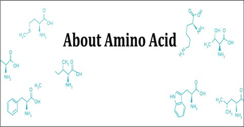 About Amino Acid