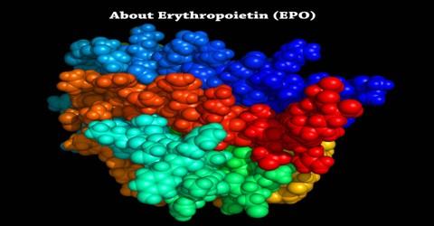 About Erythropoietin (EPO)