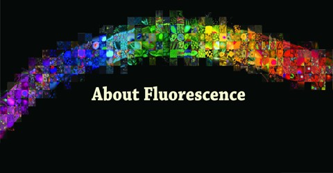 About Fluorescence