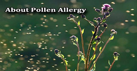 About Pollen Allergy