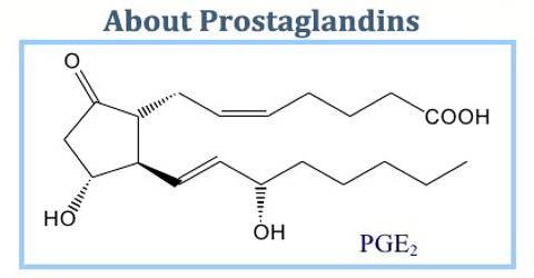 About Prostaglandins (PG)