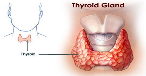 Thyroid Gland Assignment Point