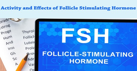 Activity and Effects of Follicle Stimulating Hormone