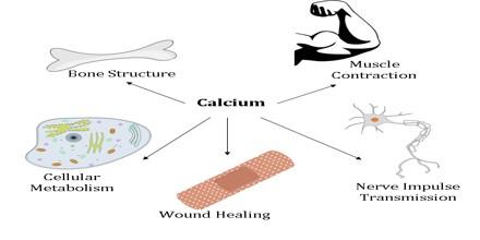 role of calcium in the body pdf
