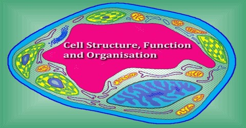 Cell Structure, Function and Organisation